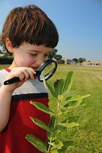 Celebrate Spring With Stories and Common Core Activities