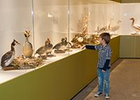 Make the Most of Museum Visits With Your Child
