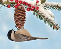 Make a Birdfeeder for Wintertime Science Fun