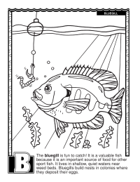 ABCs Coloring Book: B Is for Bluegill
