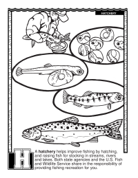 ABCs Coloring Book: H Is for Hatchery
