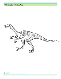 Velociraptor Coloring Page