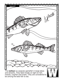 ABCs Coloring Book W Is For Walleye