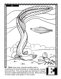 ABCs Coloring Book: E Is for Eel