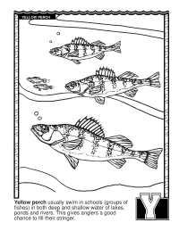 ABCs Coloring Book: Y Is for Yellow Perch