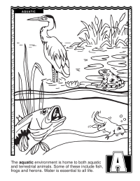 ABCs Coloring Book: A Is for Aquatic