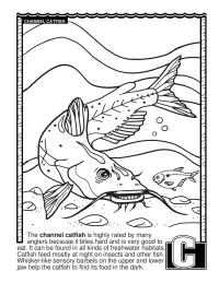 ABCs Coloring Book: C Is for Channel Catfish