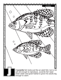 ABCs Coloring Book: J Is for Juvenile Fish